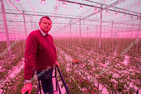 Richard Lewis, operations director at Sterling Suffolk, in the biggest semi-closed glasshouse in the UK