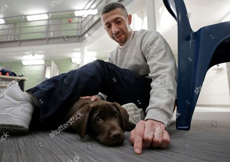 """Inmate Justin Martin bonds with a chocolate lab puppy at Merrimack County Jail in Boscawen, N.H. The New Hampshire jail is the first in the state to partner prisoners with the """"Hero Pups"""" program to foster and train puppies with the goal of placing them with military veterans and first responders in need of support dogs"""