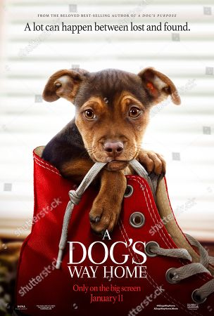 Stock Photo of A Dog's Way Home (2019) Poster Art.