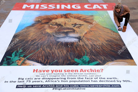 Giant missing cat poster commissioned by National Geographic, designed by street artist, Dean Zeus Colman.