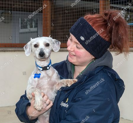 Rescue centre worker Alice Walker with Douglas the Bichon Frise after having his fur shaved