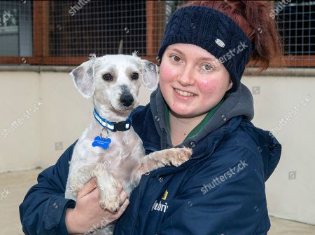 Stock Image of Rescue centre worker Alice Walker with Douglas the Bichon Frise after having his fur shaved