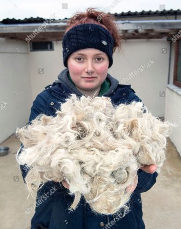 Editorial picture of Dog had to be rescued from heavily matted coat, Bicester, Oxon, UK - 04 Jan 2019