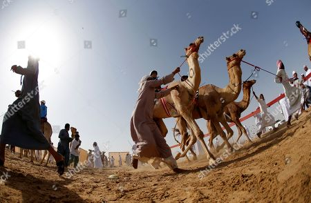Stock Photo of Camel jockeys prepare to compete during a camel race held as part of the Sultan Bin Zayed Heritage Festival in the desert at Sweihan, in Al-Ain, United Arab Emirates, 02 February 2019. The Sultan festival is part of efforts to revive and safeguard the age-old tradition of camel and saluki sports, which is considered an integral part of the UAE and Gulf heritage. The event features traditional camel races and camel beauty contests in addition to the traditional souq (a camel auction), saluki race and competitions for traditional handicrafts, the festival is under patronage of HH Sheikh Sultan bin Zayed Al Nahyan, the President's Representative and Chairman of the Emirates Heritage Club (EHC).