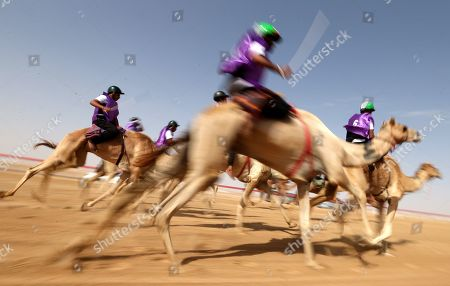 Stock Image of Camel jockeys compete during a camel race held as part of the Sultan Bin Zayed Heritage Festival in the desert at Sweihan, in Al-Ain, United Arab Emirates, 02 February 2019. The Sultan festival is part of efforts to revive and safeguard the age-old tradition of camel and saluki sports, which is considered an integral part of the UAE and Gulf heritage. The event features traditional camel races and camel beauty contests in addition to the traditional souq (a camel auction), saluki race and competitions for traditional handicrafts, the festival is under patronage of HH Sheikh Sultan bin Zayed Al Nahyan, the President's Representative and Chairman of the Emirates Heritage Club (EHC).
