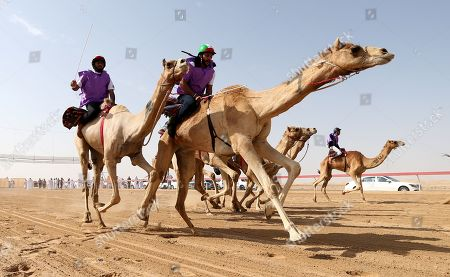 Camel jockeys compete during a camel race held as part of the Sultan Bin Zayed Heritage Festival in the desert at Sweihan, in Al-Ain, United Arab Emirates, 02 February 2019. The Sultan festival is part of efforts to revive and safeguard the age-old tradition of camel and saluki sports, which is considered an integral part of the UAE and Gulf heritage. The event features traditional camel races and camel beauty contests in addition to the traditional souq (a camel auction), saluki race and competitions for traditional handicrafts, the festival is under patronage of HH Sheikh Sultan bin Zayed Al Nahyan, the President's Representative and Chairman of the Emirates Heritage Club (EHC).