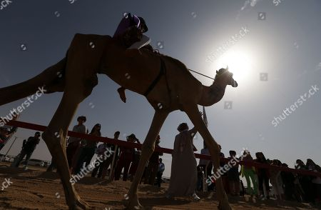 A Camel jockey returns after an unsuccessful start during a camel race held as part of the Sultan Bin Zayed Heritage Festival in the desert at Sweihan, in Al-Ain, United Arab Emirates, 02 February 2019. The Sultan festival is part of efforts to revive and safeguard the age-old tradition of camel and saluki sports, which is considered an integral part of the UAE and Gulf heritage. The event features traditional camel races and camel beauty contests in addition to the traditional souq (a camel auction), saluki race and competitions for traditional handicrafts, the festival is under patronage of HH Sheikh Sultan bin Zayed Al Nahyan, the President's Representative and Chairman of the Emirates Heritage Club (EHC).