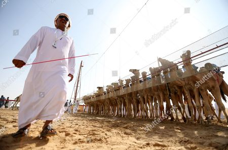 Camel jockeys prepare to compete during a camel race held as part of the Sultan Bin Zayed Heritage Festival in the desert at Sweihan, in Al-Ain, United Arab Emirates, 02 February 2019. The Sultan festival is part of efforts to revive and safeguard the age-old tradition of camel and saluki sports, which is considered an integral part of the UAE and Gulf heritage. The event features traditional camel races and camel beauty contests in addition to the traditional souq (a camel auction), saluki race and competitions for traditional handicrafts, the festival is under patronage of HH Sheikh Sultan bin Zayed Al Nahyan, the President's Representative and Chairman of the Emirates Heritage Club (EHC).