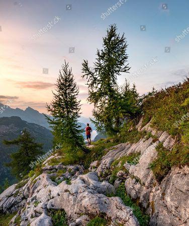 MODEL RELEASED Hiker stands between two Larches (Larix), summit of Feldkogel, mountain landscape, view of Koenigssee at sunset, left Watzmann Suedspitze and Watzmannkinder, national park Berchtesgaden, Berchtesgadener Land, Upper Bavaria, Bavaria, Germany
