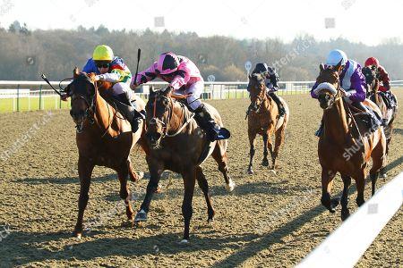 Horse Racing 15 Feb 2019 Stock Photos (Exclusive)   Shutterstock