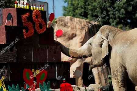 Editorial picture of Trompita elephant celebrates 58th birthday in Guatemala City, Ciudad De Guatemala - 17 Feb 2019