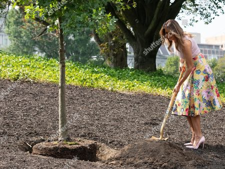 First Lady Melania Trump wears stiletto high heels while planting a tree on the South Lawn of the White House, August 27, 2018. The sapling was taken from the Eisenhower Oak located near the Kennedy Garden
