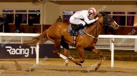 Horse Racing - 20 Feb 2019