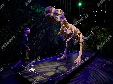 A boy looks at a dinosaur sculpture that are part of 'The Art Of The Brick' traveling exhibition of art made out of Lego's appearing at the Perot Museum of Nature and Science in Dallas, Texas, USA, 21 February 2019. The artist Nathan Sawaya was a former New York City corporate lawyer.