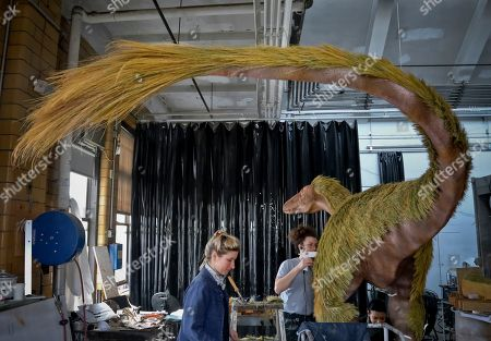 """Stock Picture of Hannah Rawe, left, exhibition preparator at the American Museum of Natural History (AMNH), and her team of David Kirshoff, center, and Celeste Carballo, right, prepare a young Tyrannosaurus Rex replica with feathers in the museum's exhibition workshop, in New York. When completed, the replica will represent a feathered 4-year-old, as part of the upcoming exhibition """"T. rex: The Ultimate Predator"""" at AMNH, starting Monday, March 11, 2019"""