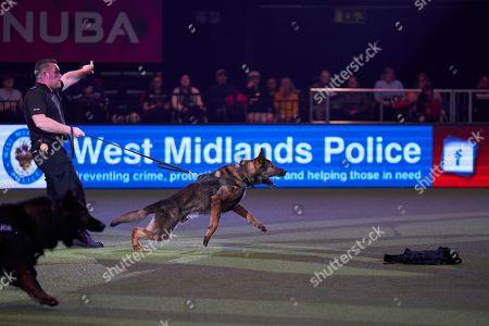 Crufts Dog Show Birmingham Stock Photos (Exclusive