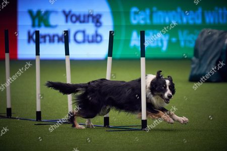Crufts Dog Show Birmingham Stock Photos (Exclusive