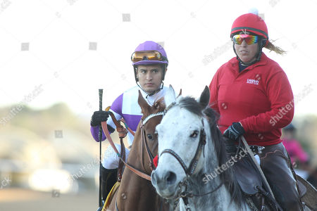 Hot Springs, Arkansas, U.S. - , Bizwhacks #4, ridden by Mario Gutierrez, before the running of the Honeybee Stakes at Oaklawn Park in Hot Springs, Arkansas. ©Justin Manning/Eclipse Sportswire/CSM