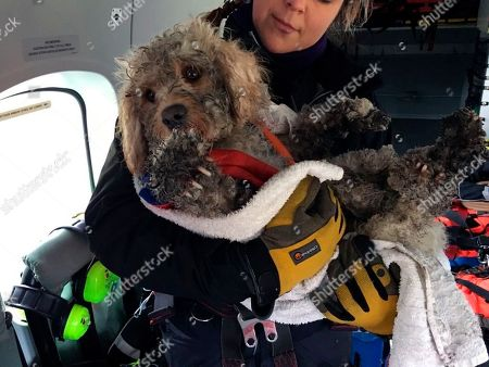 Stock Image of In this image provided by the Maritime & Coastguard Agency, winchman Kate Willoughby holds Ben the dog after he was rescued in the Cairngorms in Inverness, Scotland, . It was a routine winter training mission in northeast Scotland until the Maritime and Coastguard Agency spotted a stranded dog on the snowy Cairngorms mountains below. They couldn't fly away and leave the dog in trouble, so winchman Mark Stevens on Wednesday was lowered to the ground, scooped up the cold and frightened animal, and raised back to the helicopter