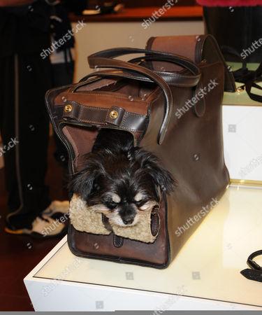 Dog in a box!