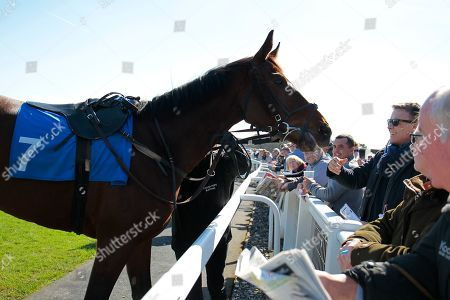Malangen says hello to a man in the crowd in the paddock before winning the Rifleman's Novices' Selling Hurdle at Exeter for David Pipe and Tom Scudamore.