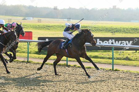 Stock Picture of ALBERT FINNEY ridden by Kieran O'Neill 1st The Ladbrokes Handicap Stakes at Lingfield Copyright: Ian Headington/racingfotos.com