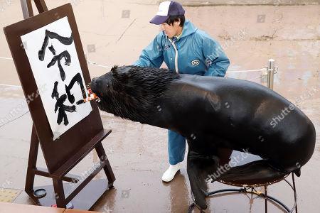 "A male sea lion ""Leo"" shows its calligraphy skills  writing the new Imperial era name ""Reiwa"" in Chinese characters at Hakkeijima Sea Paradise aquarium in Yokohama"