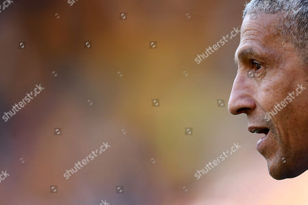 Chris Hughton manager of Brighton & Hove Albion.