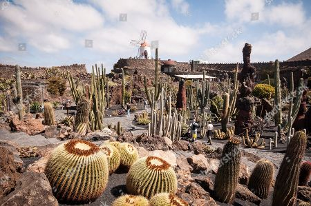 Stock Photo of A general view of the Garden of the Cactus designed by Spanish artist Cesar Manrique (1919-1992) in the municipality of Teguise, Lanzarote island, Canary Islands, Spain, 23 April 2019, on the occasion of the first centenary of his birth. Manrique is known for his use of nature and for reconciling his work around the environmental values of his native island, Lanzarote.