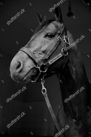 GILLTOWN STUD. Stallion SEA THE STARS pictured at the County Kildare Stud.