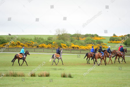 Currabeg Stables, Curragh. The John Oxx trained SKITTER SCATTER and Stephanie Roussell (left,light blue jacket) head to the gallops for morning work ahead of this weekend's Qipco 1000 Guineas at Newmarket.