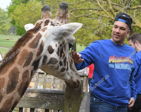 ©Calyx  X Factor winner Matt Terry (who stars as Alex the Lion) in MADAGASCAR THE MUSICAL at the Cotswold Wildlife Park Burford near Oxford.