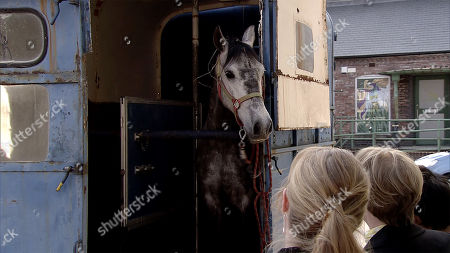 Ep 9780 Monday 27th May 2019 Sally Metclafe, as played by Sally Dynevor, Jenny Connor, as played by Sally Ann Matthews, Sinead Tinker, as played by Katie McGlynn, and Yasmeen Nazir excitedly take ownership of a beautiful racehorse. After a celebratory drink, the women head outside to admire their new horse only to find it's been replaced by an old nag. Sally realises they've been had.