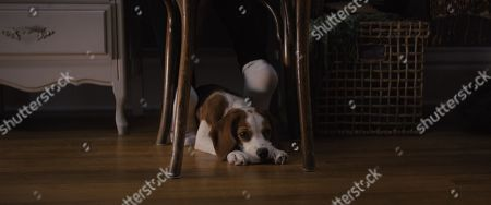 Editorial image of 'A Dog's Journey' Film - 2019