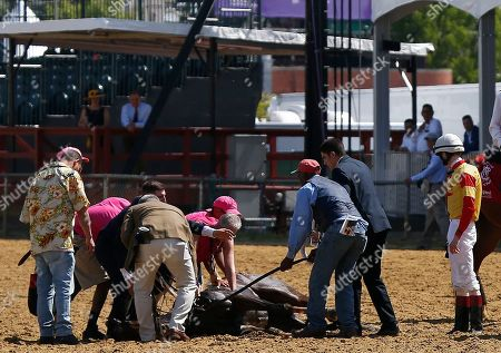 Congrats Gal horse collapses at Pimlico Race Course, Baltimore