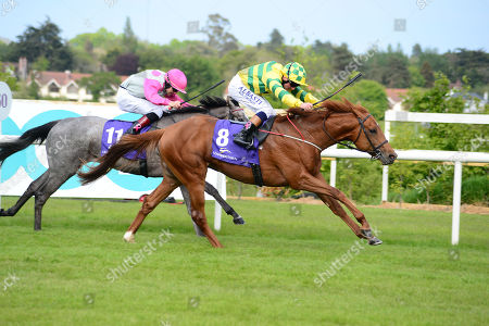 LEOPARDSTOWN. MOHICAN HEIGHTS and Chris Hayes win from LIL GREY for trainer Fozzy Stack.