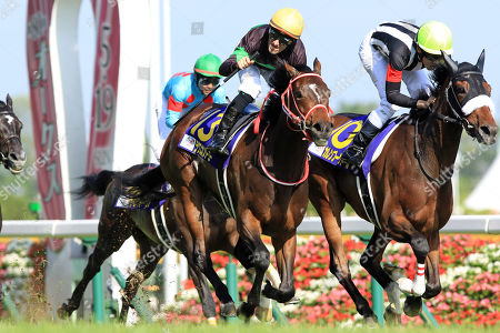 , Tokyo, Japan, Loves only you with Mirco Demuro (orange cap) up wins the Yushun Himba (Japanese Oaks) at Fuchu racecourse.