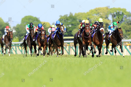 Editorial picture of Horse Racing - 19 May 2019