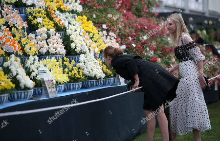 Stock Image of Princess Beatrice with her friend Alice Naylor-Leyland as they look at a display during their visit to the RHS Chelsea Flower Show