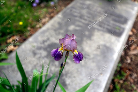 Stock Photo of Jennifer Walker. An iris grows at the Helmbold family plot at the Woodlands Cemetery in Philadelphia. The cemeteries of yore existed as much the living as for the dead. And a handful of these 19th century graveyards are restoring the bygone tradition of cemetery gardening
