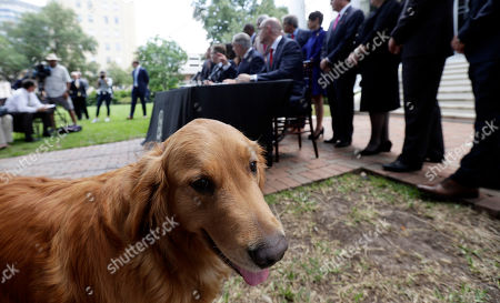 Greg Abbott, Dan Patrick, Dennis Bonnen, Pancake. Governor Greg Abbott's dog Pancake joins Abbott, seated center, Lt. Governor Dan Patrick, seated left, and Speaker of the House Dennis Bonnen, seated right, and other law makers for a joint press conference where changes to teacher pay and school finance were announced at the Texas Governor's Mansion in Austin, Texas, in Austin