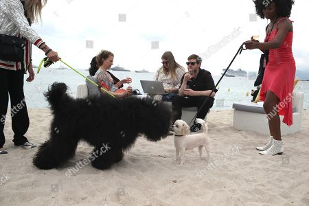 'Palm Dog' photocall, 72nd Cannes Film Festival
