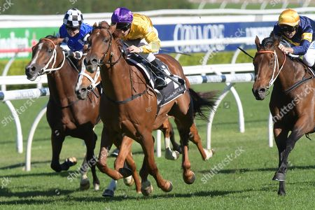 Jockey Tim Clark rides Wolfe (2-L) to victory in race 4, the Sporting Chance Cancer Foundation Handicap during the Sporting Chance Cancer Foundation Race Day at Randwick in Sydney, Australia, 25 May 2019.