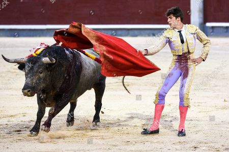 Spanish matador Angel Sanchez is seen performing with a 'Jose Escolar' ranch fighting bull