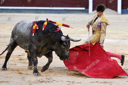 Stock Picture of Spanish matador Angel Sanchez is seen performing with a 'Jose Escolar' ranch fighting bull