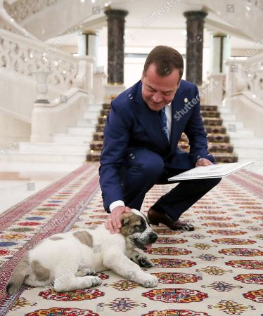 Russian Prime Minister Dmitry Medvedev (L) pets a Central Asian Shepherd puppy presented to him by Turkmenistan President Gurbanguly Berdymukhamedov (not pictured) ahead of a meeting of the Commonwealth of Independent States (CIS) Council of Government Heads in Ashgabat, Turkmenistan, 31 May 2019.