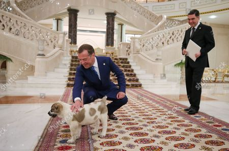 Russian Prime Minister Dmitry Medvedev (L) pets a Central Asian Shepherd puppy presented to him by Turkmenistan President Gurbanguly Berdymukhamedov (R) ahead of a meeting of the Commonwealth of Independent States (CIS) Council of Government Heads in Ashgabat, Turkmenistan, 31 May 2019.