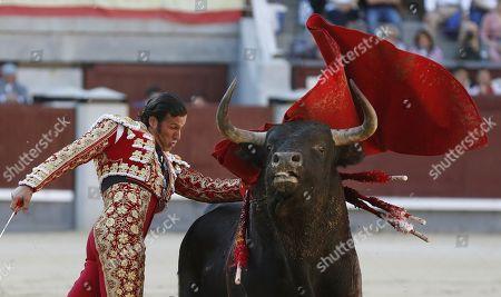 Spanish bullfighter David Mora fights a bull during the 18th day of the San Isidro Bullfighting Fair at the Las Ventas bullring in Madrid, Spain, 31 May 2019.