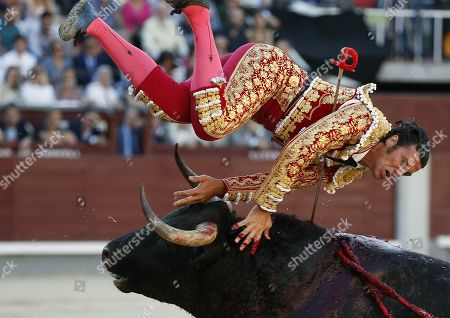Spanish bullfighter David Mora is gored by a bull during the 18th day of the San Isidro Bullfighting Fair at the Las Ventas bullring in Madrid, Spain, 31 May 2019.