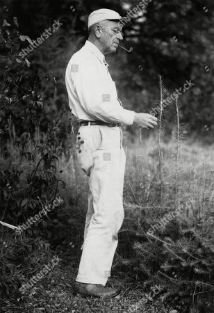 Aldo Leopold, (1886-1948), American ecologist, forester, and environmentalist examining tamarack tree. Leopold was a founder of The Wilderness Society in 1935. 1947 portrait.